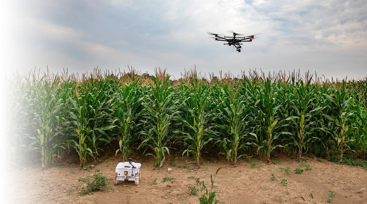 A drone flies over a corn field and a robot rolls through it