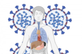 human body with coronavirus illustration